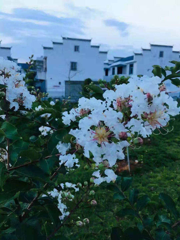 急报 瑞金壬田发现一大型度假村,民宿 漂流 果蔬 花海全都有