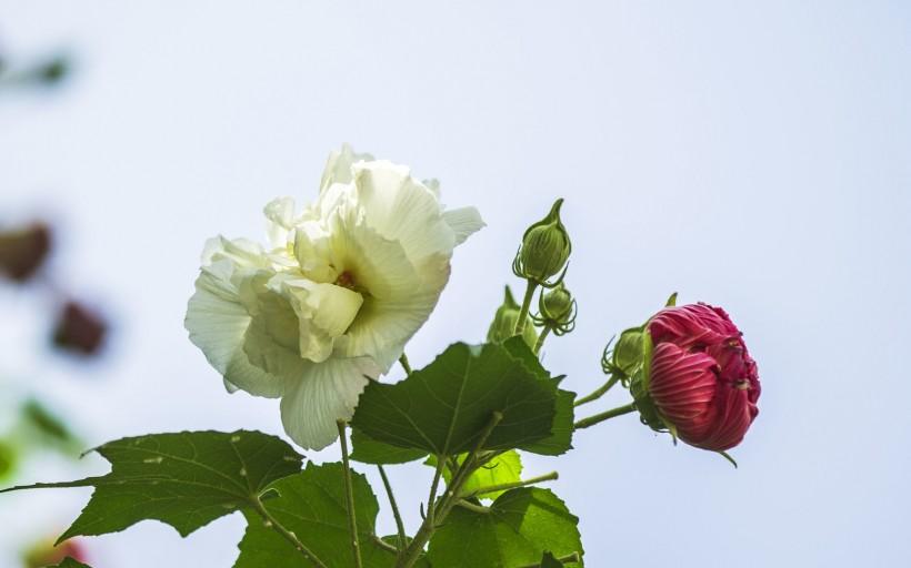 <b>痴情又温柔,一辈子只宠爱一个人,体贴又温暖的属相男</b>