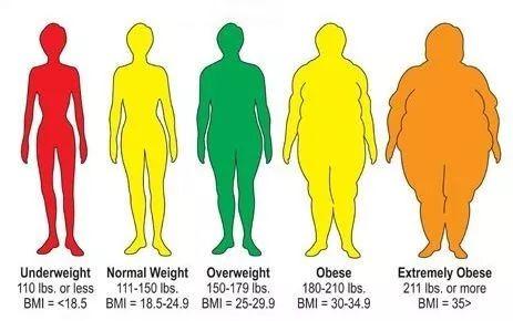 胖是有原因的 ! 人类现有环境可能易致肥胖 ?