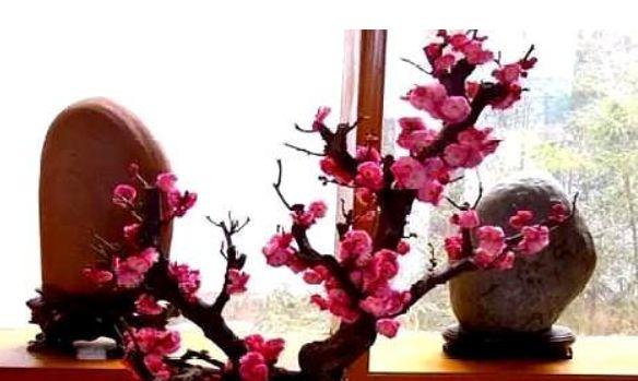 低价供应观果寿桃树 桃梅桩盆景 中小型造型优雅_阿里巴巴