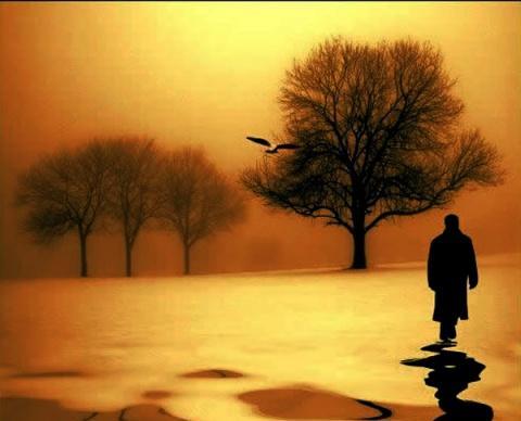 塔羅牌占卜你選擇下圖哪棵大樹最具靈性?測試你命中註定是什麼命數!_生活