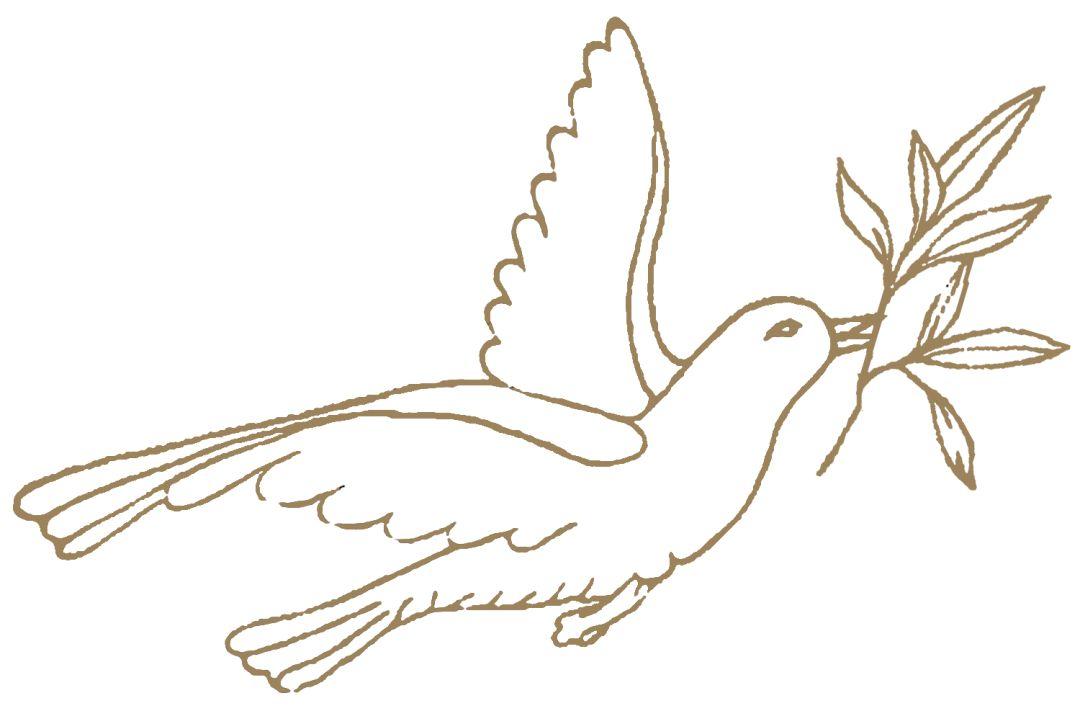 和平鸽简笔画 和平鸽 飞吧,飞吧