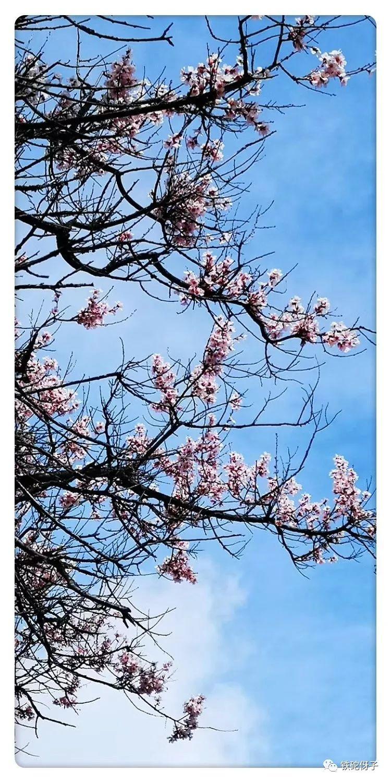 己亥杂诗 一二六首至一五五首 桃花集锦
