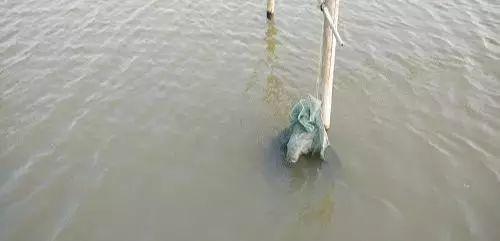 水生动物的分类_最大的水生动物_可以养的水生动物有哪些