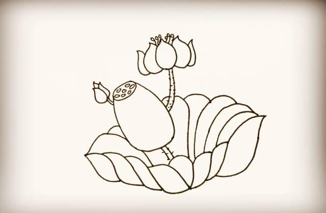 荷花 莲藕简笔画来袭,超级适合教孩子画