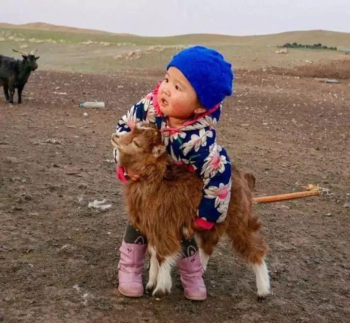 蒙古人的宠物,蒙古人与动物的相处方式