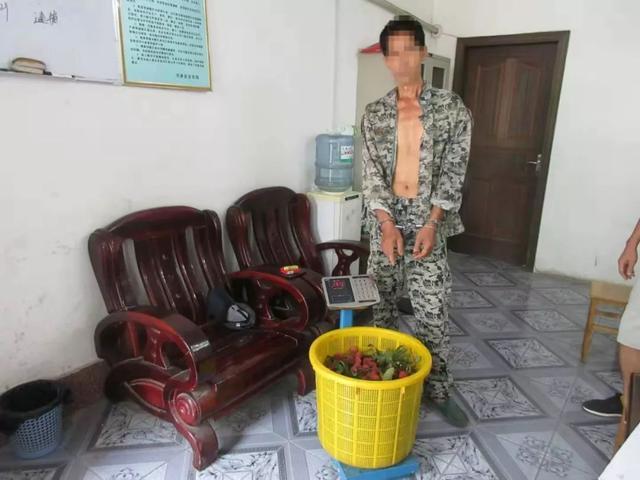 事发兴业,两男子翻墙偷荔枝被当场抓住,他们的理由让人哭笑不得