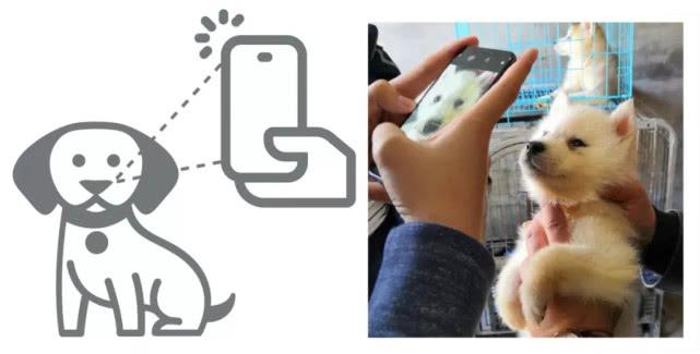 旷视科技宣布推出鼻纹识别解决方案 狗也可以身份识别了