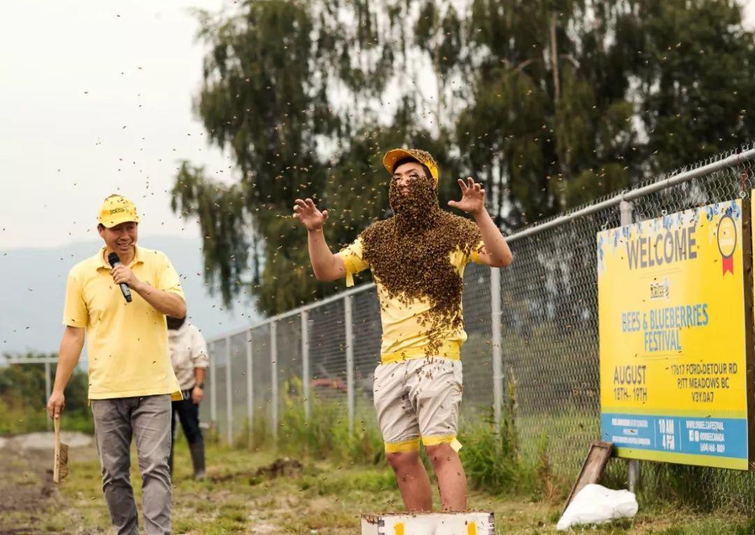 蜜蜂&蓝莓狂欢节约起来!图片