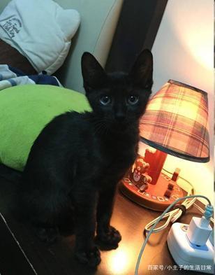 领养了一只小黑猫,几个月后成了虎斑猫,主人纳闷:猫咪会褪色?