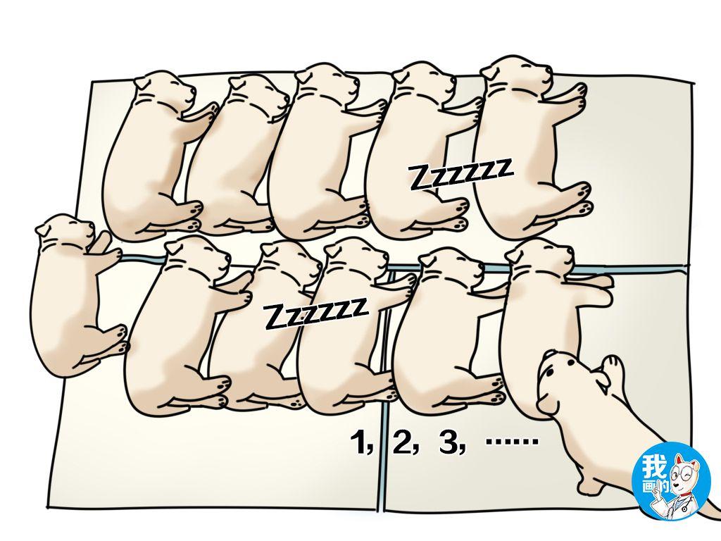 原创 11只小奶狗排排睡得正香,角落里那只却让人一脸问号:站岗呢?