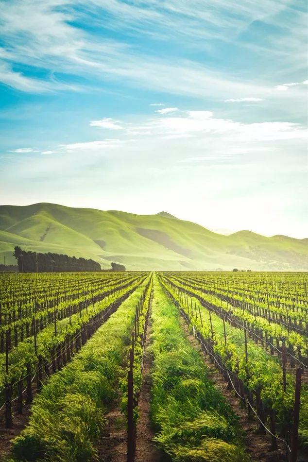 乡村振兴:农业项目失败的10个教训