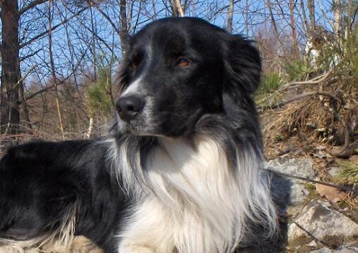 普贝斯:犬类缺乏牛磺酸症状与治疗方法
