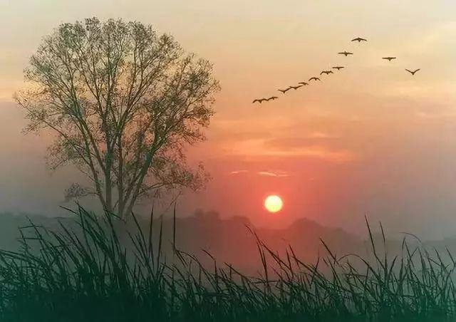 十句诗词话夕阳,只是无人与我立黄昏。