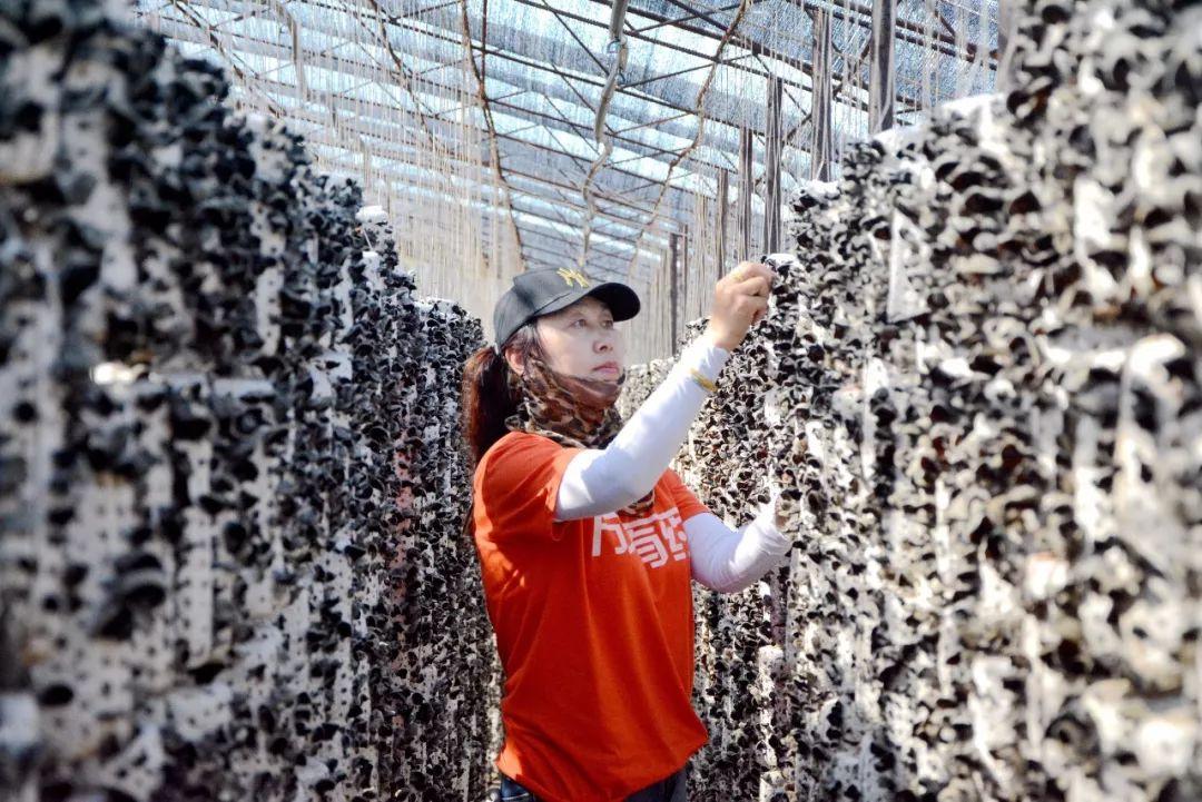 【关注】上半年牡丹江栽培食用菌16.5亿袋预计产量82万吨
