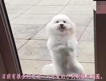 狗狗惹主人生气,被关门外不准进屋,但看到狗狗反应笑喷了