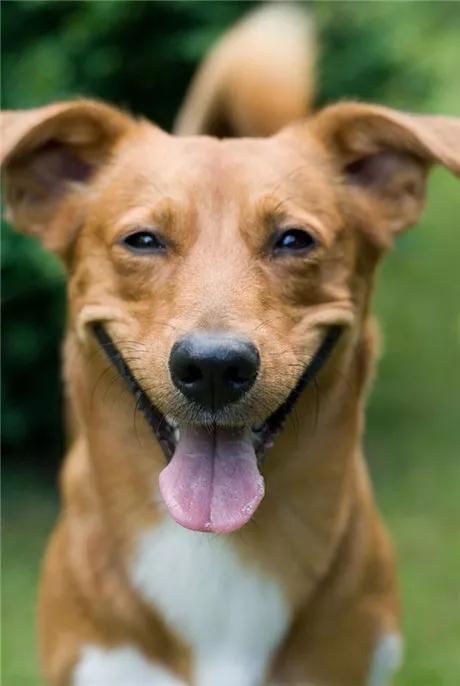 把生病的土狗抛弃后,她又高高兴兴的买了一只品种犬!