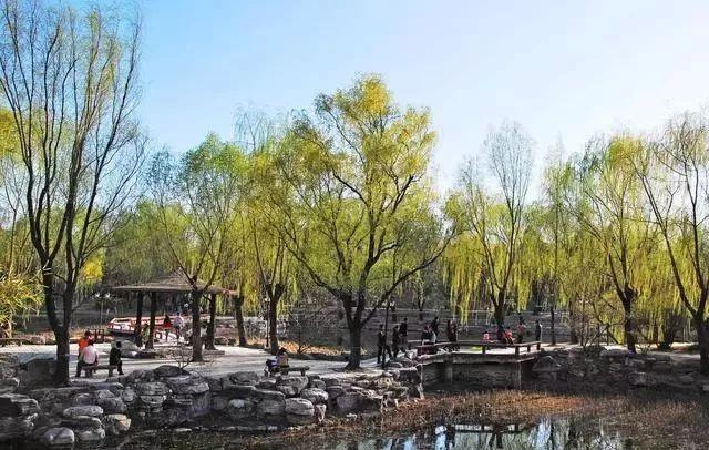 沧州万荣森林公园规划_重磅消息!6.48平方公里,邯郸复兴经济开发区最新规划来啦!_建设