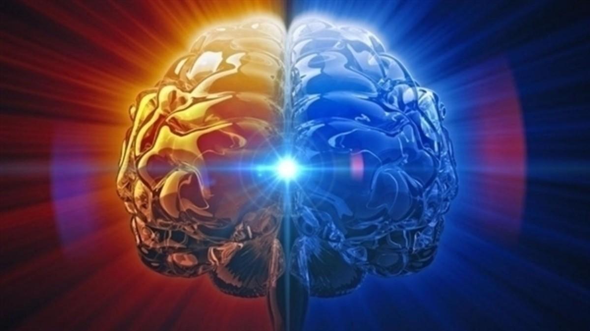 搜狐科學 | 史無前例!人類最完整大腦三維圖像出爐_研究