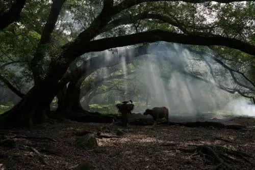 「文学平利」刘德明|老贵与牛