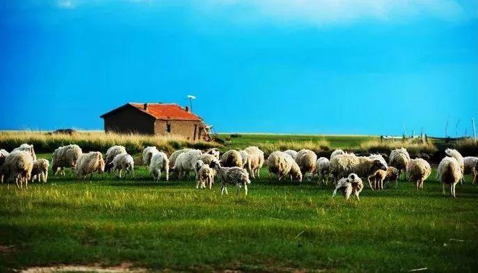 夏天,你应该来一次草原之旅