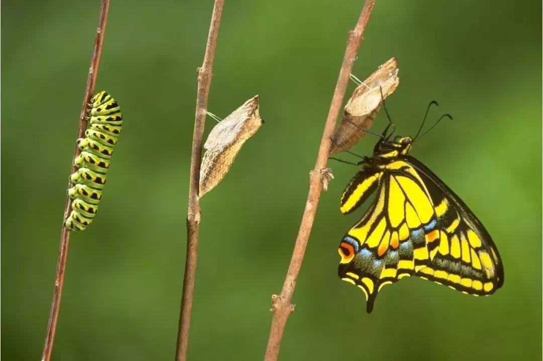 什么什么什么蝶的成语_成语故事图片