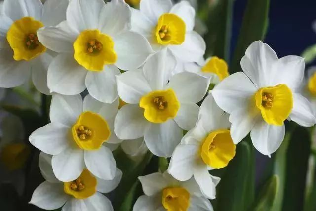 最易让人受到伤害的10种植物排行榜!