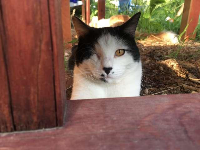 很很撸干b_邻居男孩疯狂撸猫,撸到躺地上,主人:很开心他不嫌弃独眼猫咪