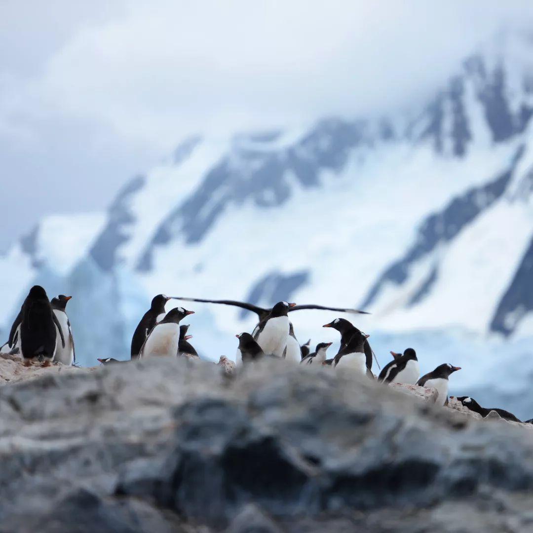 这位妈妈花了13天带孩子探险南极她认为真正的教育在路上