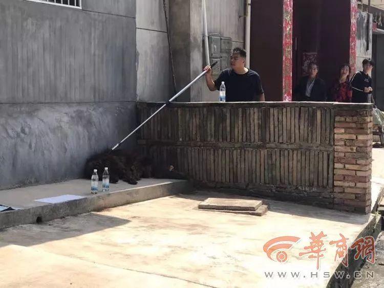 蓝田警方击毙一只流浪藏獒