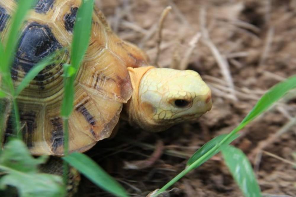 祭乌龟文:纪念我埋葬的一只乌龟