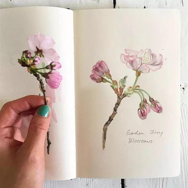 Somang Lee 的植物日记,带给你奇妙的四季之旅!