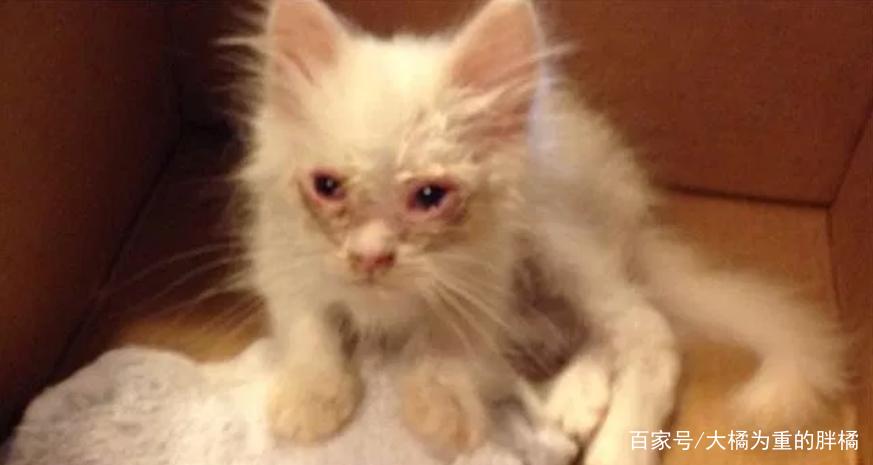 大妈免费送养丑小猫,还晒出猫妈妈的靓照,小伙领回家后真是值了