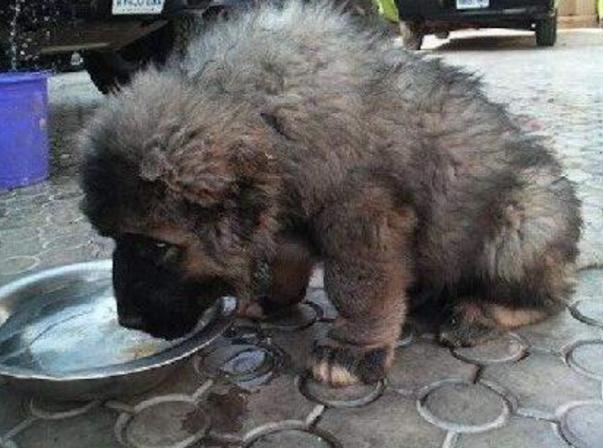 """俄罗斯小伙街边收养流浪狗,一年后长成""""巨熊"""",价值上万"""