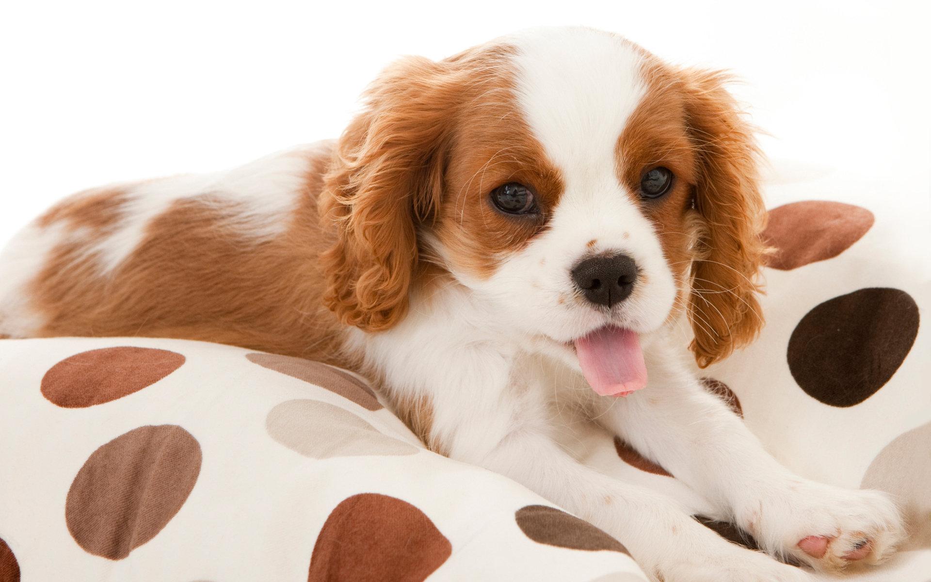 宠物趣闻 狗狗驱完虫拉稀带血,狗狗驱虫后拉肚子