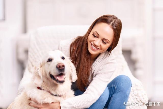 小型犬和大型犬的三个生活差异,那么多人喜欢小型犬不是没有道理