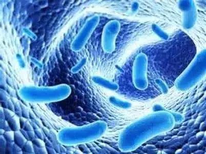 <b>使用抗生素后为什么建议补充益生菌?</b>