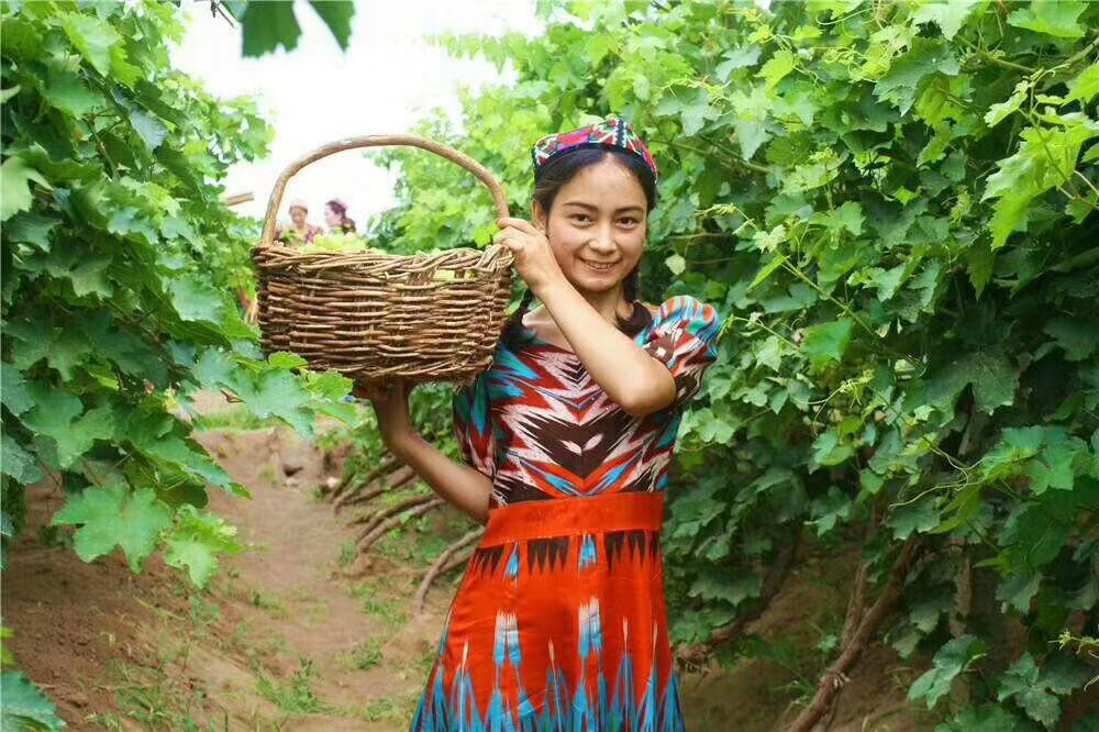 新疆吐鲁番55.2万亩葡萄成熟了!550种葡萄等你来品尝!约么?_村民