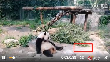 神吐槽:北京动物园游客拿石头砸大熊猫,园方提升场地硬件也别忘了追责扔石者