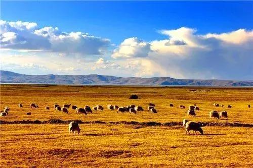 ?#31859;?#22799;季,去一趟西藏