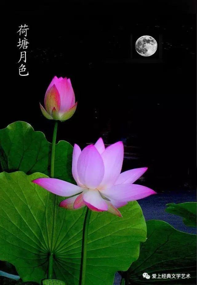 名家精品 朗诵艺术家 磊明 林如 朗读 朱自清 经典散文《荷塘月色