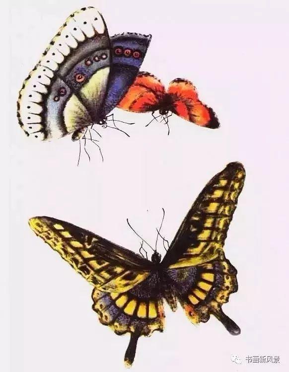 国画中的花蝴蝶,美成了百花仙子!