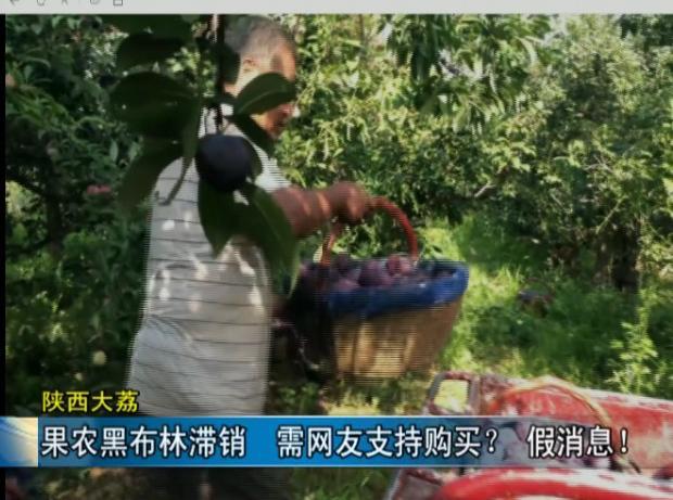 陕西大荔:果农黑布林滞销,需网友支持购买?假消息