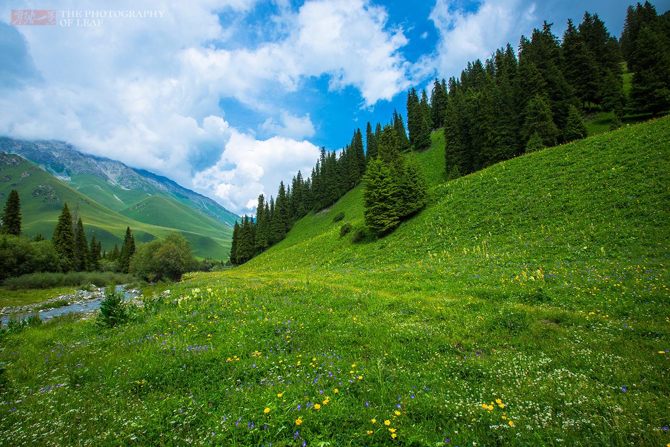 新疆这树同根四杆,十世班禅在此修行成圣地,游客行为使两杆枯死