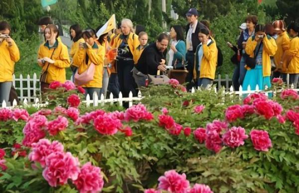 中国花协推荐牡丹为国花,洛阳、菏泽两地率先