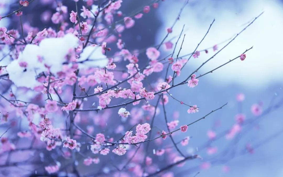《黄帝内经》中的四季养生原则:春生夏长,秋收冬藏插图
