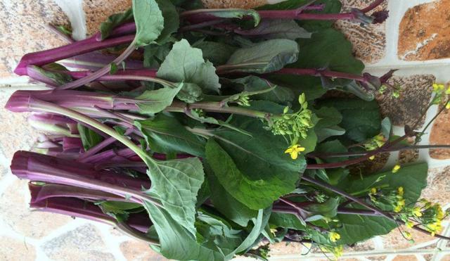紫菜苔这几种做法,简单美味又下饭,厨房小白也能做