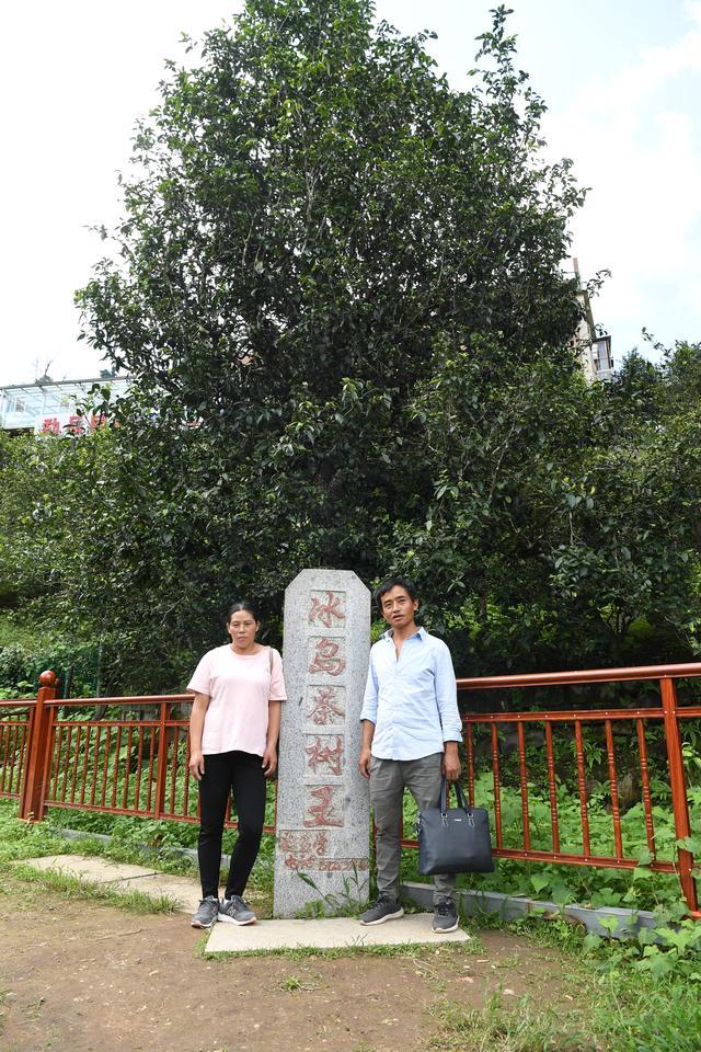 云南双江勐库茶农刁成国的纯手工制茶房