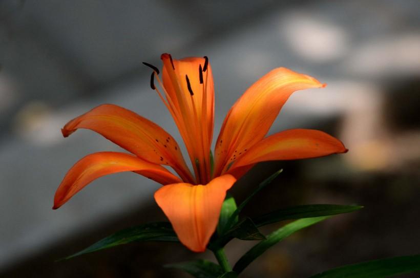 8月好運降臨,運勢一飛沖天的四屬相,桃花朵朵開,橫財擋不住