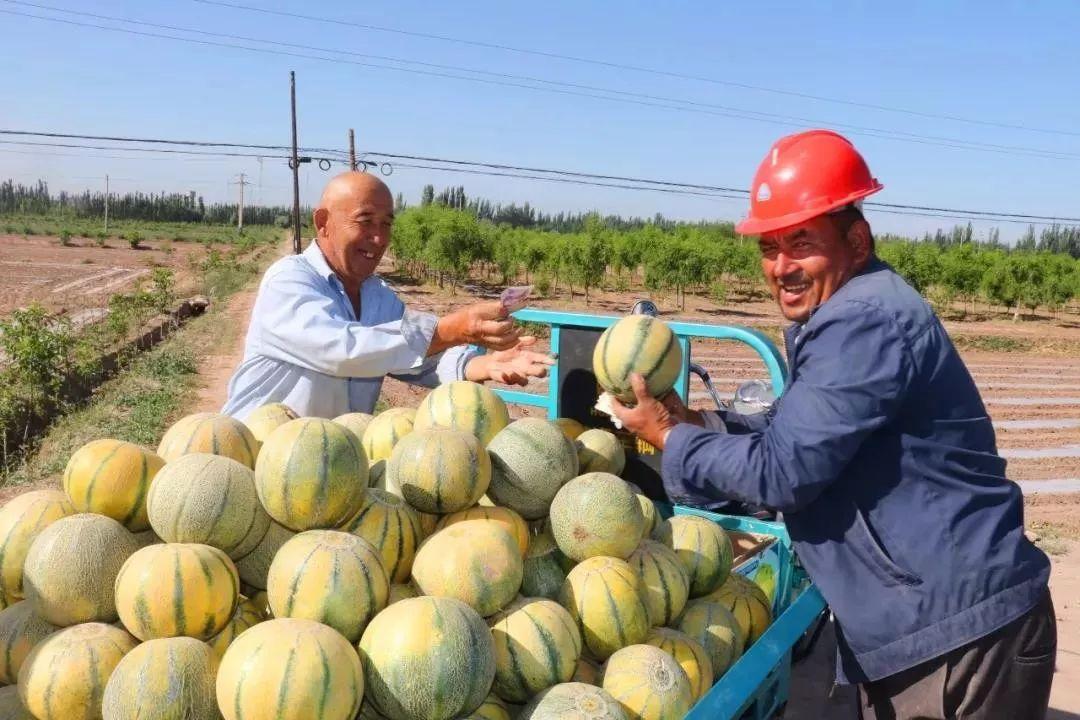 德孝中华yabovip文摘:我和我的祖国丨新疆喀什,又到瓜果飘香时
